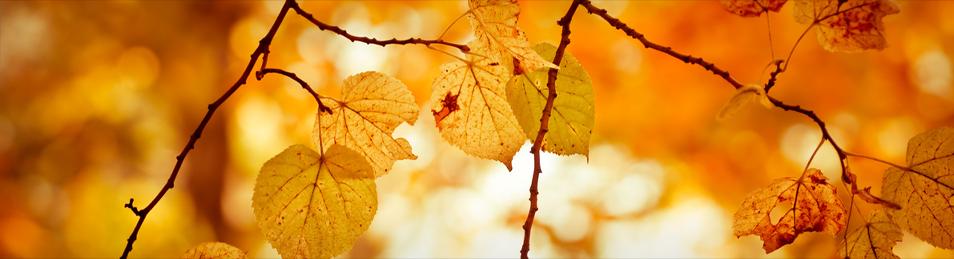 Deko im Herbst – Meine Wohnung und ich
