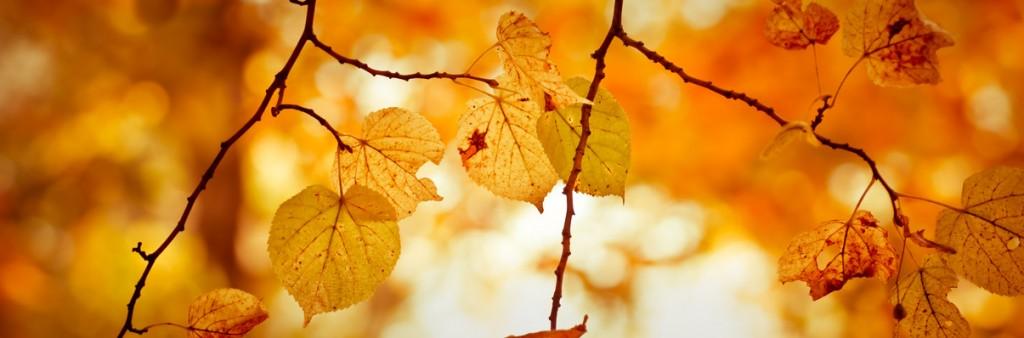 Wärmende Herbstdüfte für kühle Tage: Parfums von Micallef