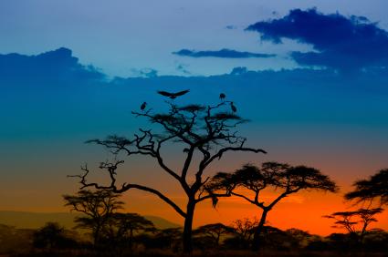 Afrika, dunkel lockende Welt …