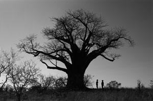 Baobab: Authentisch afrikanisch