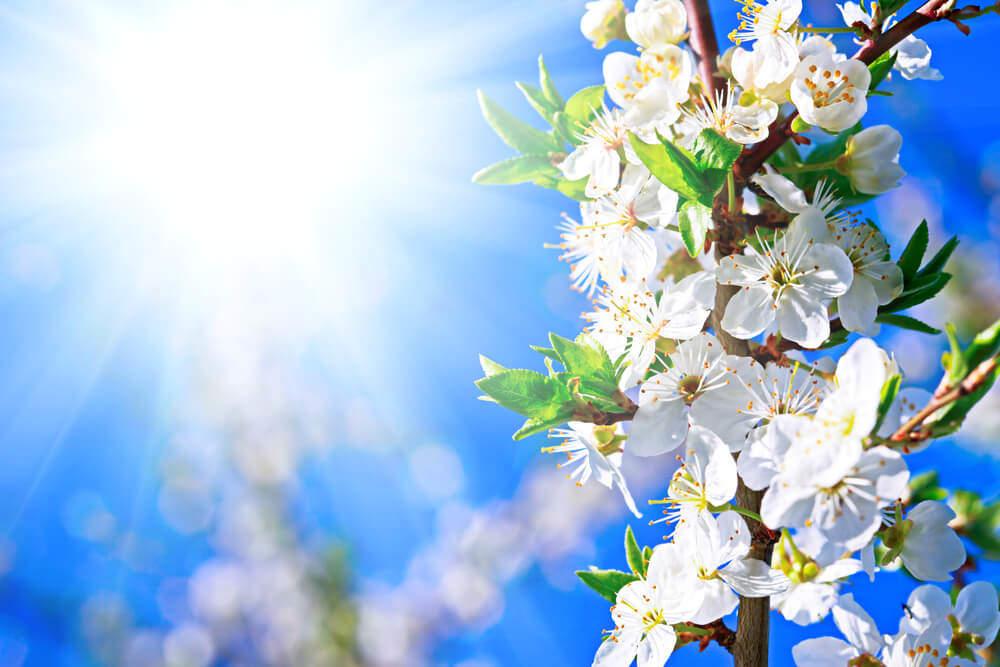 Erste Frühjahrsboten – unsere Duftneuheiten 2015